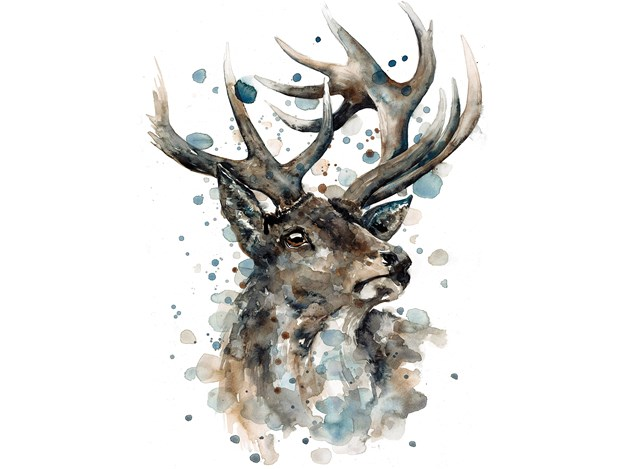 Deercard.jpg