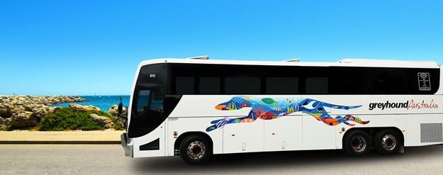 Reef Dog coach new artwork.jpg