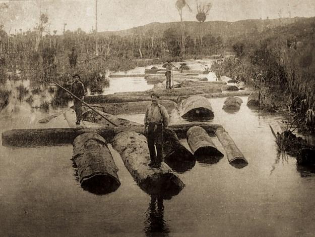 Puhoi-logging-3.jpg