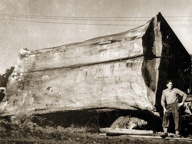 Puhoi-logging-4.jpg