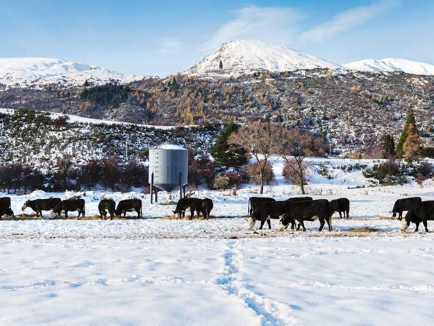 Winter-grazing-must-not-compromise-animal-health-and-welfare.jpg