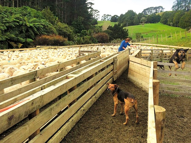Women-in-ag-Nicky-Berger-open-farms-3.jpg