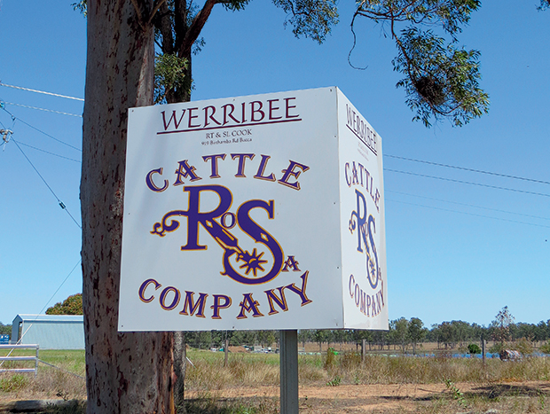 Rob -Cook -profile _Werribee -cattle -property _3376