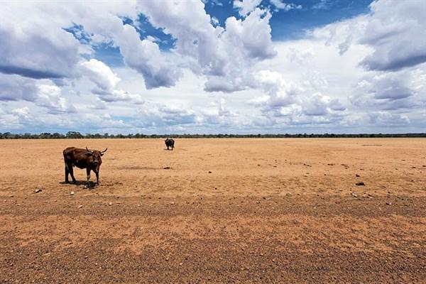 Drought stricken QLD