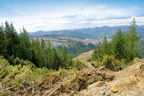 Logging -industry