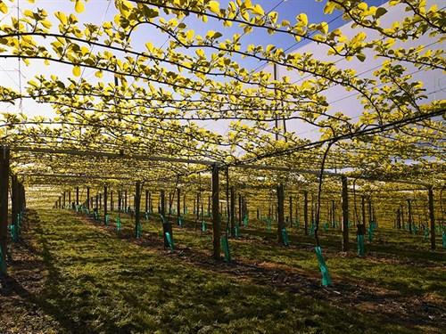 Horticulture --NZ