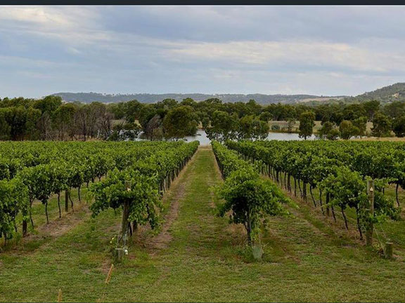 View of vineyard looking onto lake
