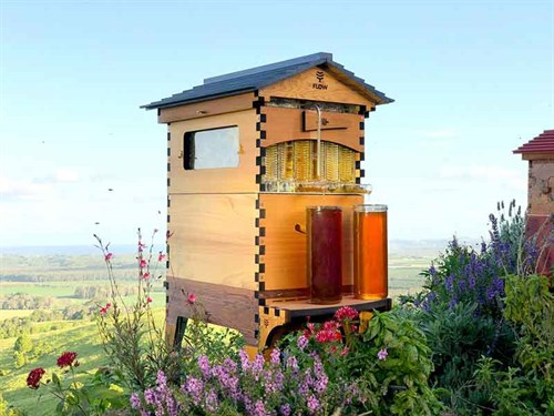 The %20Flow %20Hive %202%20at %20the %20Flow %20office %20apiary %20overlooking %20the %20far %20north %20coast %20of %20NSW%20Australia .%20small %20%20honeyflow