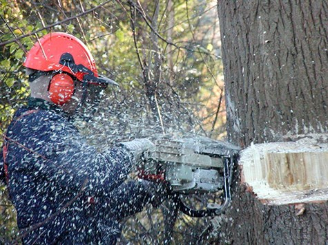 Forestry _2
